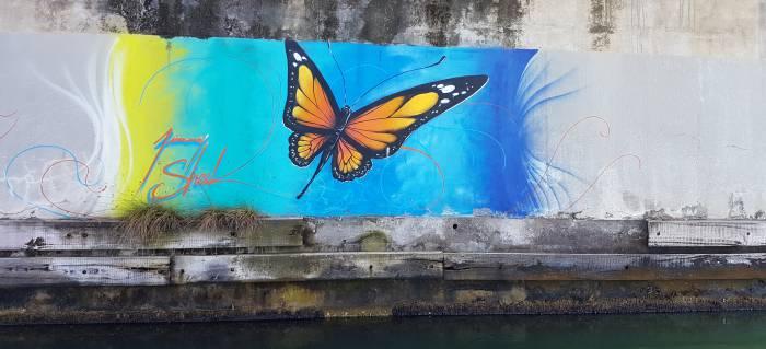 Papillon peint sous le pont de la rivière salée en Guadeloupe