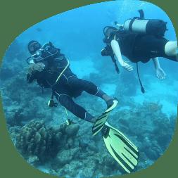 Plongée avec Alizée Plongée dans le parc Cousteau
